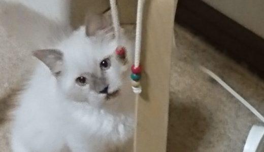 【猫の本能】ちいさくても……?