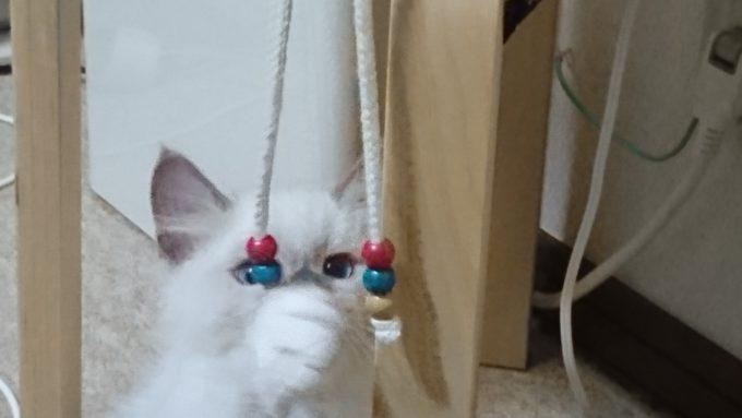パーカーの紐の先にある部品に猫パンチをする子猫。