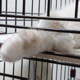 眠っているので脱力している、子猫の前足