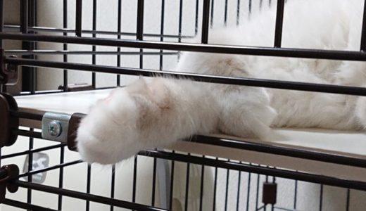 【可愛くて、罪】子猫の寝言にもうメロメロ!