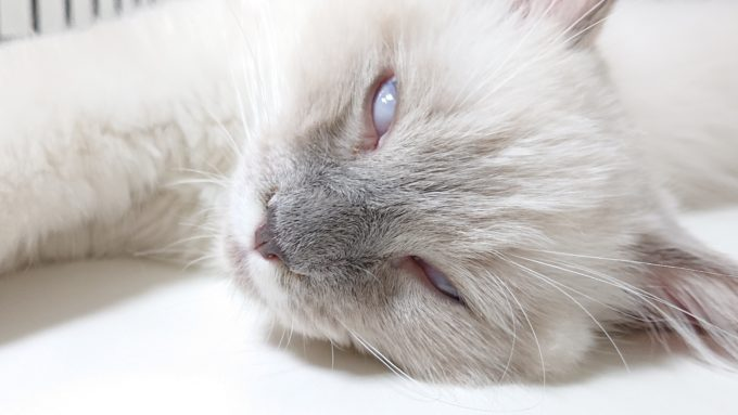 眠りながら白目をむいている子猫。白目をむいているものの、安眠しています。