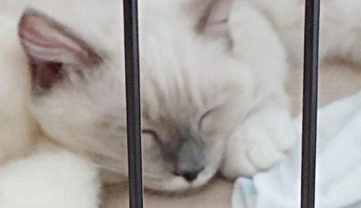 猫にかかる費用の内訳 ~2018年7月から~
