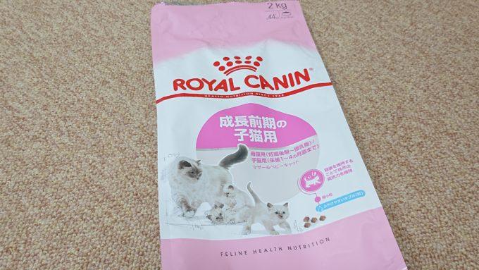 ロイヤルカナン 成長前期の子猫用の正面パッケージ。ラグドールのイラスト入り。