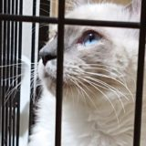 【大事なルーティン】猫用ケージの掃除について