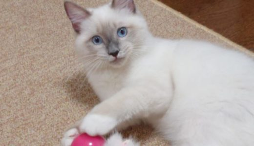 上手な猫との遊び方♪興味を引くコツ・夢中にさせる技・事故の防止策をご紹介!