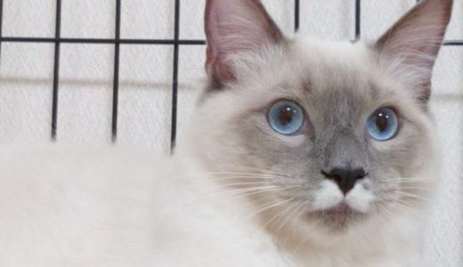猫をどこで飼う?屋外と室内、そしてケージ飼育について