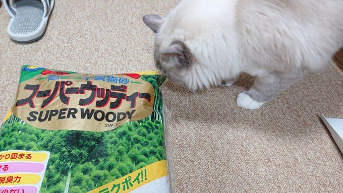 スーパーウッディ(小粒)を覗き込む猫