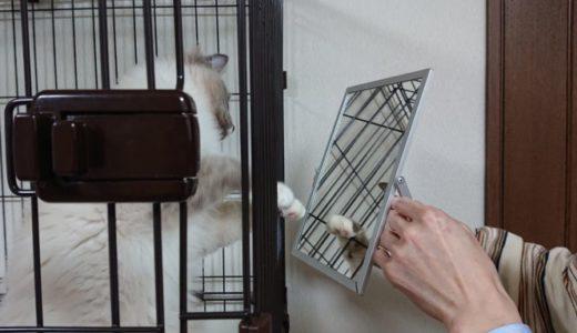子猫に鏡を見せるとどの様な反応を示すのか?