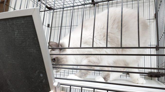 2019年01月21日19時59分04秒の鏡を見る子猫