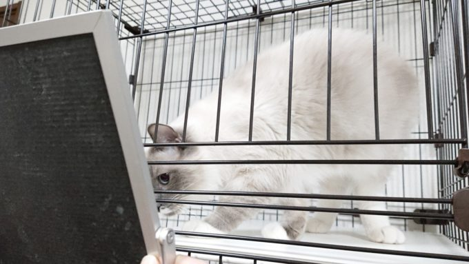 2019年01月21日19時59分03秒の鏡を見る子猫。