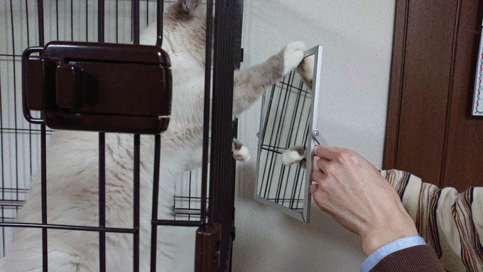 2019年01月21日19時59分56秒の鏡を見る子猫