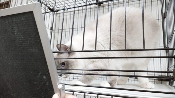 2019年01月21日19時59分03秒の鏡を見る子猫の撮影。