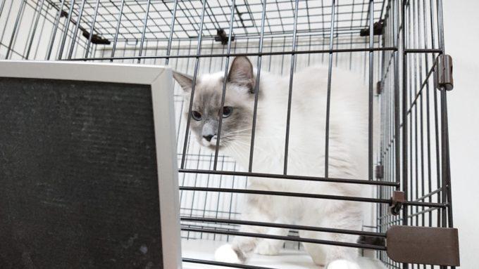 2019年01月21日19時59分02秒の鏡を見る子猫