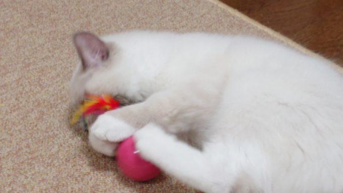 キャティーマン 七転び八起きをけりぐるみとして遊ぶ猫、2018年09月03日09時20分18秒撮影