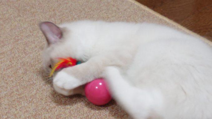キャティーマン 七転び八起きをけりぐるみとして遊ぶ猫、2018年09月03日09時20分18秒撮影。