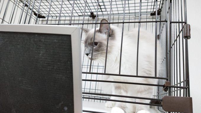 2019年01月21日19時59分01秒の鏡を見る子猫。