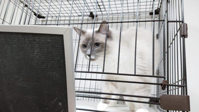 2019年01月21日19時59分01秒の鏡を見る子猫