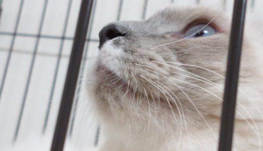 【けりぐるみの代用品】猫は座布団・クッションをどう使うのか?