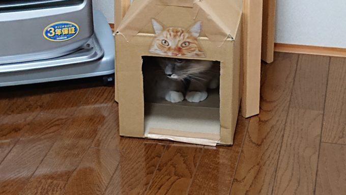 箱の中から飛び出すかどうか迷っている猫。