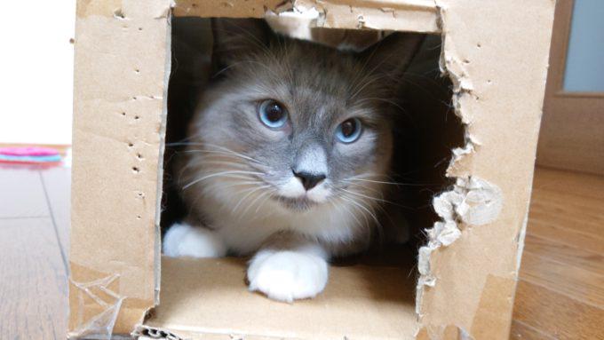 猫に使い古された段ボール箱。噛まれてボロボロになっている。