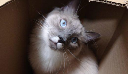 【段ボール製・猫の秘密基地】手作り猫BOXを作ろう!