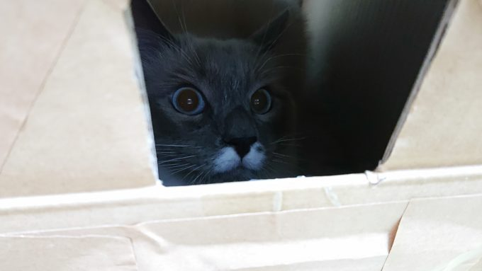覗き窓から外を見る猫。様子をうかがっています。
