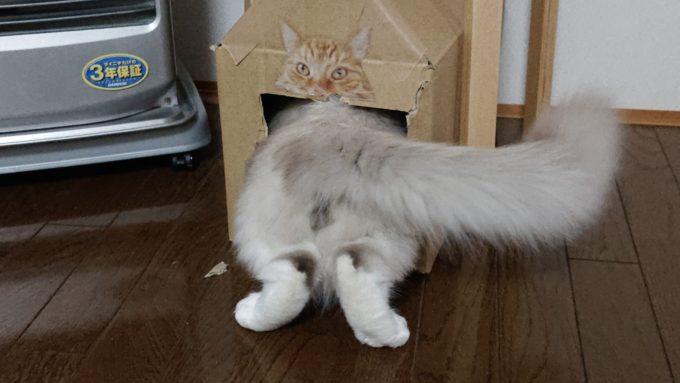 猫BOXに走り込んで中に入る猫。避難場所にしている模様。