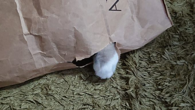紙袋を破いた猫の手の画像。