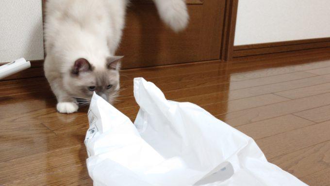 レジ袋に飛びつこうとする直前の猫の画像。