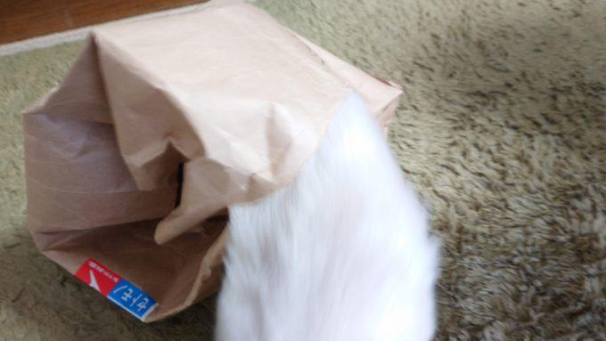 紙袋を破いて外に出る猫の画像。