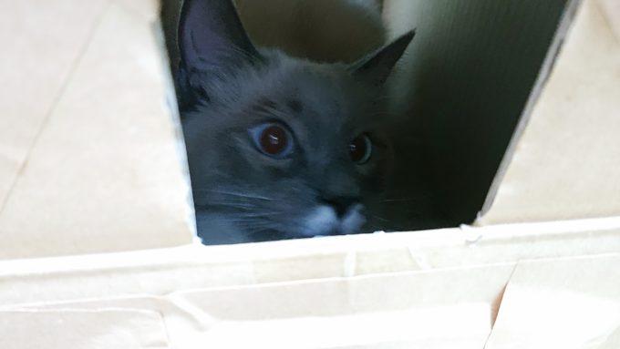 猫BOXの覗き窓からこちらを見る猫。