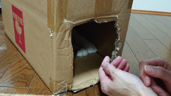 段ボール箱の中でかくれんぼしている猫。
