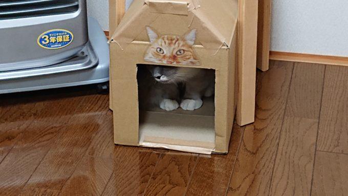 猫BOXの入り口から外を窺う猫。