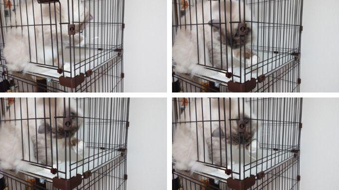 猫用ケージの破損部分を引っ張ったり噛んだりして遊ぶ猫の写真。