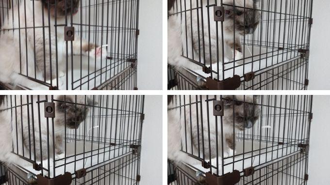 猫用ケージの破損部分で遊ぶ猫。引っ張ったり噛んだりしている。