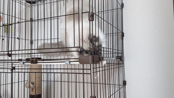 猫用ケージの破損部分を噛もうとする猫。一生懸命飛び出た部分を引っ張ろうとしている。