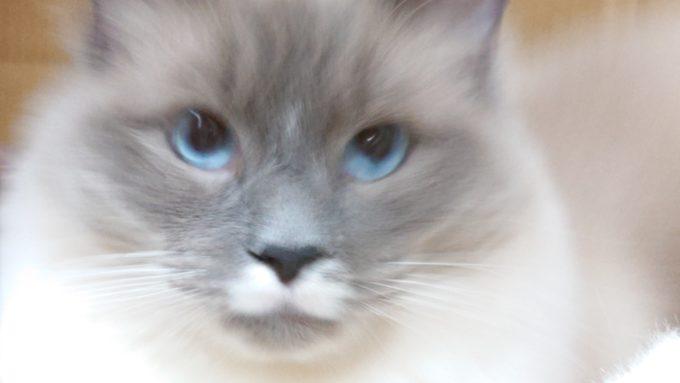 結論を出し、こちらに目を向けるプリューシュの写真。
