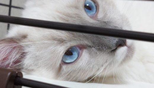 猫を飼って変わった事 ~写真撮影・画像データの処理について~