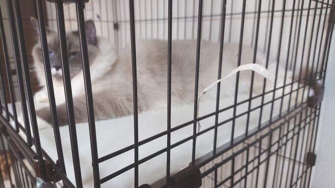 猫用ケージの剥がれた縁部分。尖っているので危険である。