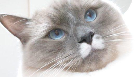 猫のお風呂にシャンプー・リンスは必要か否か問題について