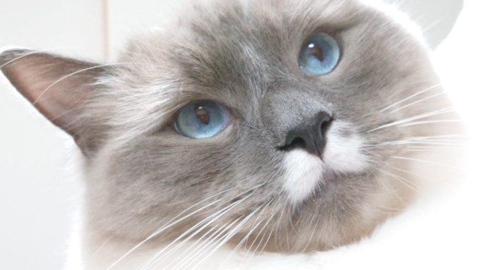 斜め上を見る猫の写真。何かを深く考えている様子。