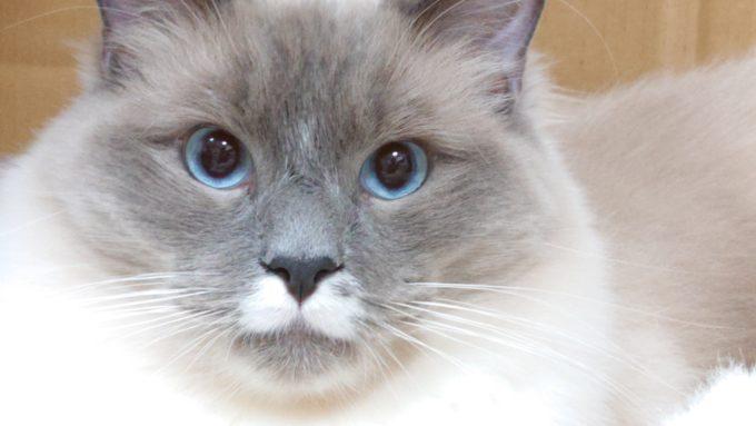活を入れるプリューシュの画像。瞳孔が開いている。