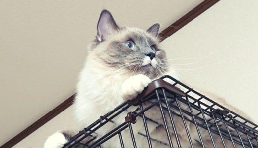 猫を飼ったら「猫イラストの入った雑貨が増える」というのは本当かどうかについて