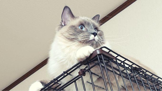 天井から横を見るプリューシュ