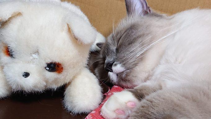 宝物のぬいぐるみとプリューシュ。自分の隣に置いて眠っている。