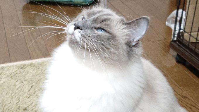 主張する猫