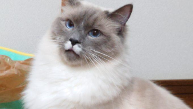 ガッカリした様子の猫の画像。