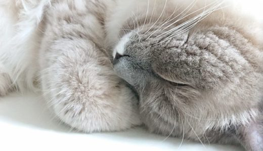 猫の排泄について ~子猫の甘えが出る瞬間~