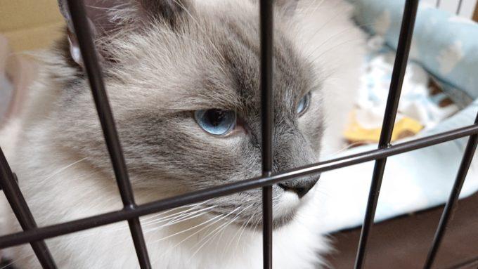 不満そうな猫の顔。少し下を向いてふてくされている。