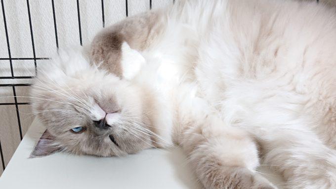 ひっくり返る猫の画像。顎の下が黒く色付いている。
